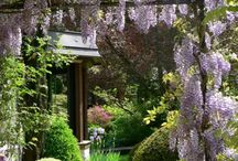 Relaxing family garden / Moodboard for a relaxing family garden in the Scottish Borders.