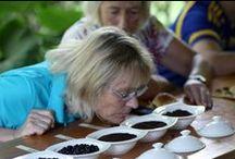 Aufgewacht – Kaffee aus Afrika in Afrika erleben und genießen! / Ein neuer Trend zeichnet sich ab. Galt Äthiopien als Ursprungsland der Arabica-Bohne bisher als einziges Land in Afrika, das eine richtig starke heimische Kaffeekultur hat, erwacht nun auch in anderen Regionen das Interesse am Kaffee. Kleine Kaffeeröstereien und coole Kaffeebars werden – vor allem in Metropolen wie Kapstadt. Immer mehr Regionen zeigen stolz ihre Anbaugebiete in den Bergen und führen Touristen die althergebrachten Zubereitungsweisen des schwarzen Wundergetränkes vor.