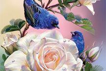 Pássaros e outras aves pinturas gravuras etc.