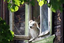 Animais à janela.