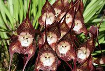 Flores estranhas