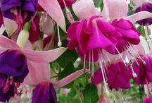 Flores - Brincos de princesa