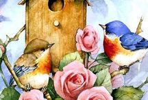 Pássaros gaiolas desenhos