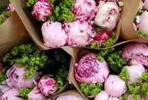 Flores pionias