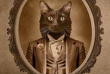 Gato / pessoa