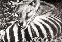 Animais extintos e em extinção