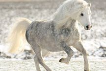Horses ❤️ / Baes!