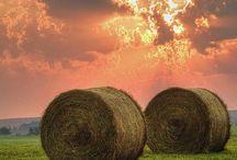 Farming !!!!!!!! / Living the farm life :)