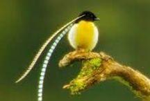Pássaros - Inspirações / Pinturas em tela