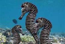 Animales sur marinos