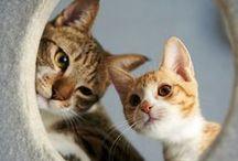 Сute kittens