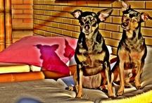 perros y animales / animales graciosos y bonitos / by Elisabet del Castillo Alonso