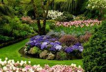 My Next Home Garden / Outdoor Space - Garden - Backyard - Patio - Porch - Terrace - Balcony Ideas and Solutions