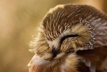 Every owl & varje uggla