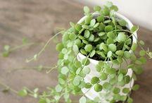 growing / by Dasha Bozhko
