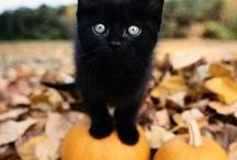 Halloweeeeeen!