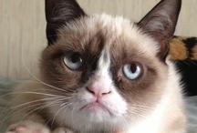 Grumpy Cat is Grumpy