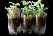 DIY Hydroponics & Garden!