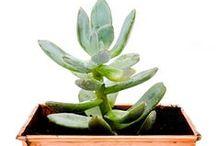 Best Indoor Houseplants / Best air-filtering houseplants for your indoor gardening. Top houseplants to grow indoors.