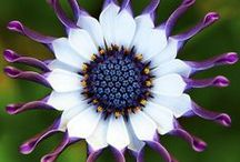 Flower Gardening / Flowers, gardening advice and tips to grow the most beautiful flowers under the sun.