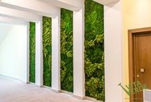 Moss Art / Our moss wall projects