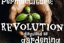 Permaculture / Care for the Earth, care for people and faire shares.