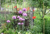 KöksTrädgård / Inseration till min stora köksträdgård
