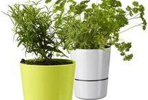 Planter og Hage / Plants and Garden / Utstyr og planter, plantering, hage og uteliv.