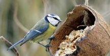 dla ptaków i owadow
