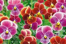 Veggies, Fruits, Trees & Flower Seeds / Seeds and plants  / by Bengal Lover