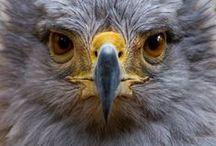 Birding Africa / Our Guide to the Top 5 Birding Hotspots