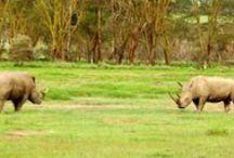 Safari Wallpaper / Download free wallpapers of wildlife found in Africa.