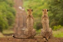 Conservation Safaris / This board share eco-friendly tips, ideas and packages for responsible travellers.