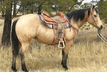 Quarter Horses!! / Western Quarter Horses!
