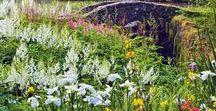 Gardens & Outdoor Design