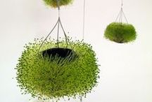 Green / How to integrate GREEN into the interior space? Some great planting ideas (BIG or small ) make indoor environment green and comfortable. / by Yiru Lu