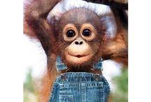 Who doesn't love monkeys?!!!