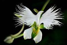 KWIATY / kwiaty wprost z natury, różne kwiaty, ciekawe kwiaty,