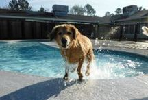 hot DOGS / This board is full of pictures, tips, and tricks for your special pet during the summertime :)