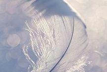 wings / Angel Wings / feathers