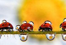 insekter & smådjur