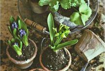 plantera, odla