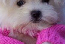 Adorable puppies / Cãezinhos adoráveis