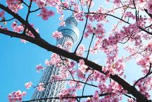 Japan, I love you!