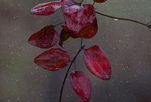 aubergine~berries / ~~~Gorgeous rich color~~~