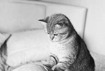 #Gatos... #Cats