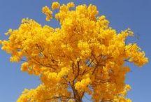 Flores del mundo / Descubre cuáles son las flores típicas de algunos de los países más bellos del mundo.