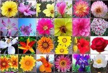 FLORES DE BACH / Conoce todo acerca de las Flores de Bach