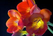 ¡Flores, flores y más flores! / En FloraQueen somos amantes de las flores, por eso reunimos en un solo tablero las creaciones más bonitas de la naturaleza.