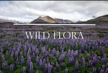 Wild Flora / This album is about our wild wild flora